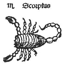 Scorpius Kopie